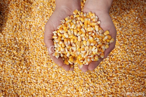 imagen de alimentos, hambre y excedentes alimentarios en el mundo
